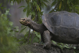 Tortoise next to Plants Reproduction photographique par  DLILLC
