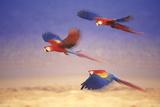 Macaws in Flight Reproduction photographique par  DLILLC