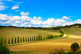Tuscany, Vineyard, Cypress Trees and Road, Rural Landscape, Italy, Europe Photographic Print by  stevanzz