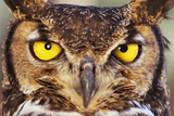 Great Horned Owl Photographic Print by  DLILLC