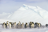 Penguins in Blowing Snow Photographic Print by  DLILLC