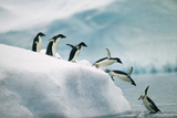 Penguins Jumping into Ocean Reproduction photographique par  DLILLC