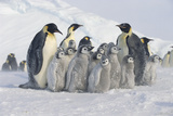 Group of Penguins Photographic Print by  DLILLC