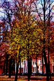 Trees Photographic Print by André Burian