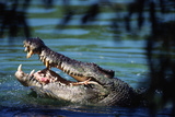 Saltwater Crocodile, Crocodile Farm on Adelaide River Photographic Print by Paul Souders