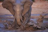 Elephant Splashing in Muddy Water Photographic Print by  DLILLC