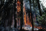 Fire in Forest Lit by Rangers Photographic Print by Jonathan Blair