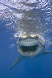 Shark Advancing with Bared Teeth Photographic Print by  DLILLC