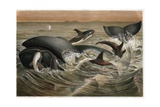 Whale and Orca by Alfred Edmund Brehm Giclee Print by Stefano Bianchetti