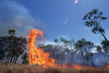 Controlled Forest Fire Photographic Print by Paul Souders