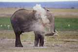 African Elephant Dusting Photographic Print by  DLILLC