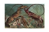 Lobster and Spiny Lobster by Alfred Edmund Brehm Giclee Print by Stefano Bianchetti