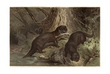 The Southern River Otter by Alfred Edmund Brehm Giclee Print by Stefano Bianchetti