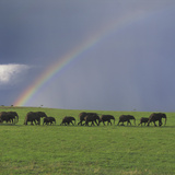 Herd of African Elephants and Rainbow Photographic Print by  DLILLC