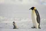 Parent Emperor Penguin and Chick Photographic Print by  DLILLC
