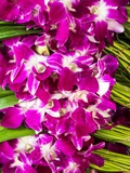 Bangkok Street Flower Market. Flowers Ready for Display at Many Places including Temples Photographic Print by Terry Eggers