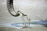 Elephant Trunk Scoops Mud Reproduction photographique par Richard Du Toit