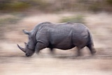 White Rhino Photographic Print by Richard Du Toit