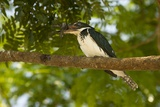 Green Kingfisher Photographic Print by Joe McDonald
