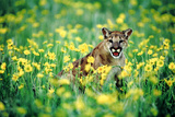 Mountain Lion in Field of Flowers Photographic Print by  DLILLC