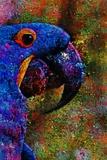 Blue Macaw Reproduction photographique par André Burian