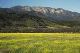 Yellow Mustard and Topa Topa Mountains in Spring, Upper Ojai, California, Usa, 04.26.2014 Photographic Print by Joseph Sohm