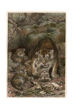 Tiger by Alfred Edmund Brehm Giclee Print by Stefano Bianchetti