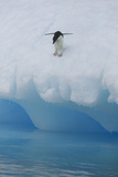 Adelie Penguin Preparing to Dive into Water Photographic Print by  DLILLC