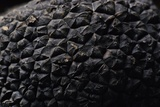 Tuber Melanosporum (Black Truffle, Perigord Truffle,French Black Truffle, Perigord Black Truffle) Photographic Print by Paul Starosta