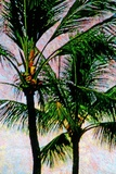 Coconut Trees Photographic Print by André Burian