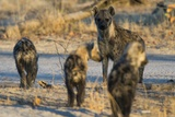 Spotted Hyaena Cubs Leaving the Den Photographic Print by Sergio Pitamitz