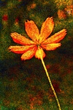 Flower Photographic Print by André Burian