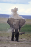 African Elephant Puffing Photographic Print by  DLILLC