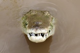 American Crocodile, Tarcoles River, Costa Rica. close up Reptile Dinosaur Croc Photographic Print by  hotshotsworldwide