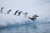 Adelie Penguins Jumping into Ocean Photographic Print by  DLILLC