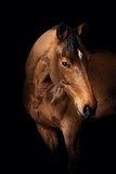 Horse Photographic Print by Fabio Petroni