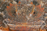 Short-Horned Lizard Photographic Print by  DLILLC