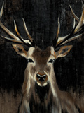 Young Buck Prints by Liz Jardine