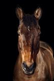 Cavallo Stampa fotografica di Fabio Petroni
