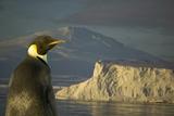 Emperor Penguin near Mount Melbourne Photographic Print by  DLILLC