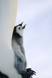 Mother Penguin Protecting Her Chick Photographic Print by  DLILLC