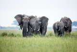 An Elephant Herd in Grassland Reproduction photographique par Richard Du Toit