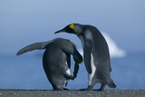 Two King Penguins Photographic Print by  DLILLC