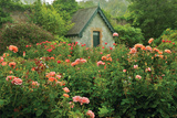 Rose Garden Photographic Print by Dennis Frates