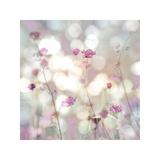 Floral Meadow II Giclée-tryk af Kate Carrigan