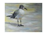 Little Sea Gull Affiches par Cheri Wollenberg