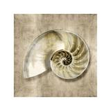 Golden Sea Life IV Giclee Print by Caroline Kelly