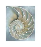 Nautilus in Blue II Giclee Print by Caroline Kelly