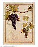 Cabernet Sauvignon Prints by Meg Page