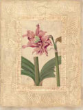 Estudio de Flores II Prints by Javier Fuentes